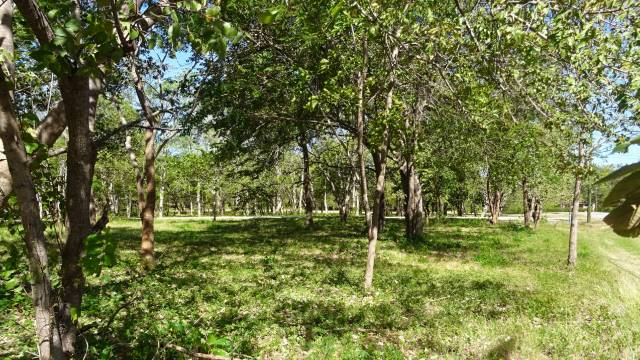 Flat tree-filled lot for sale in quiet surroundings...